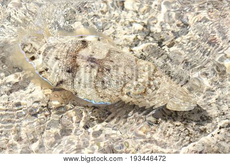 Ocean cuttle hide in a shallow water
