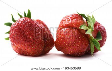 Pair of imperfect organic fresh ripe heirloom strawberries isolated closeup