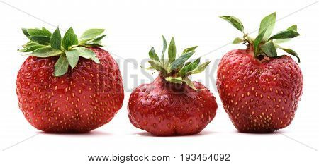 Three imperfect organic sweet strawberries isolated closeup