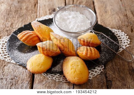 Homemade Madeleine Cookies With Sugar Powder Close-up. Horizontal