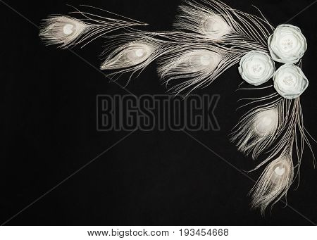 Black Dark Retangular Horizontal Background With Gentle White Ranunculus Flowers and Peacock Feathers, Lying Flat, Top View. Have an Empty Place For Your Text.