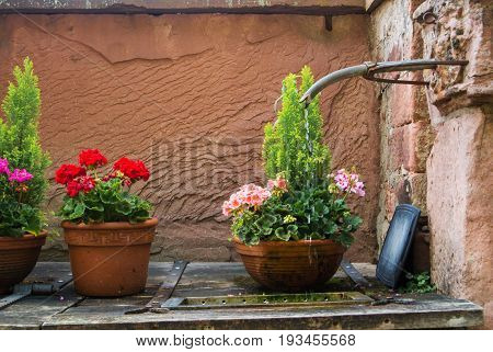 Water Pouring Out Of The Hose In The Courtyard Of The Old House And Pots With Pink And Rose Flowers