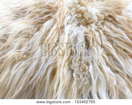White Organic Fleece Texture. Old Coat. White Carpet Background. Blanket