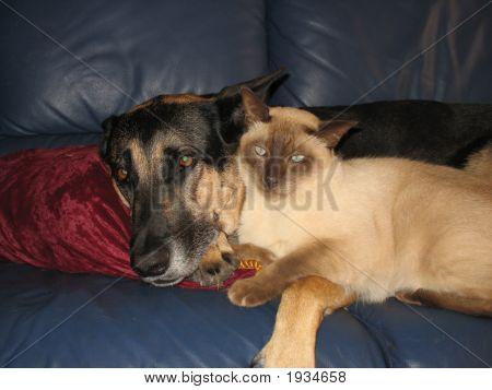 Cat and dog lying next to each other poster