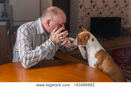 Smart basenji dog having hard conversation with master sitting at the table. The dog calms gesticulating man