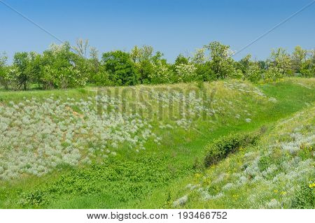 Ukrainian landscape with ravine overgrown with fresh weeds in May