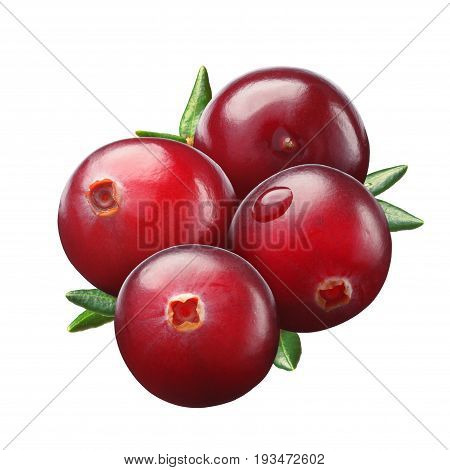 Cranberry, Four Berries, Paths