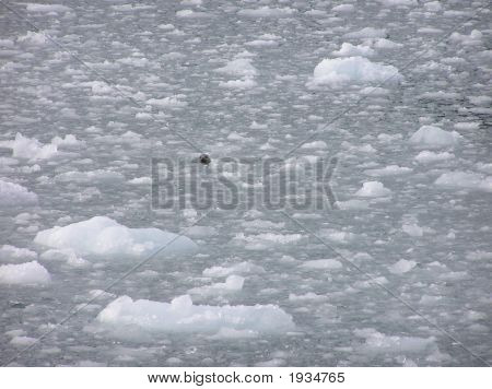 Seal In The Ice