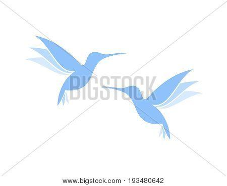 Flying hummingbirds. Exotic birds on white background