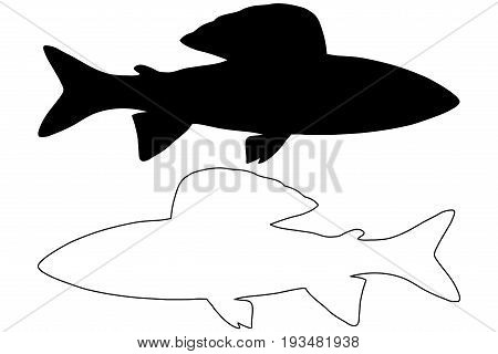 grayling silhouette vector , ( Thymallus thymallus )
