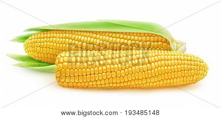 Two Isolated Corn Ears