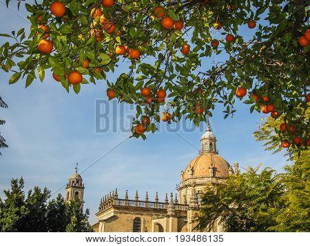 Cathedral And  Oranges In Jerez De La Frontera