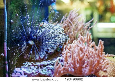Beautiful pictures of sea urchins. The concept of the water.