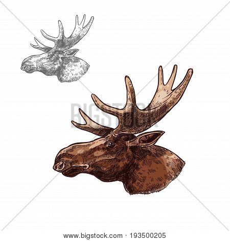 Moose elk head sketch vector icon. Wild forest stag deer or reindeer with antlers. Isolated wildlife fauna and zoology symbol or emblem for blazon for hunting sport team, nature adventure scout club