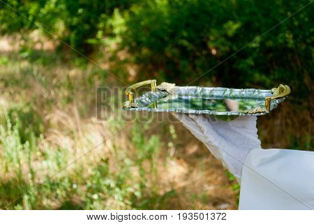 The waiter's hand in a white glove and with a white napkin holds a metal tray of silvery rectangular metal on a blurred background of nature green bushes and trees