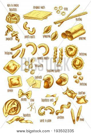 Pasta sketch icons set with names. Vector isolated italian macaroni sorts of tagliatelle, lasagnia or stelle and bucatini, durum funghetto or konkiloni and spaghetti, fettuccine or farfalle pasta