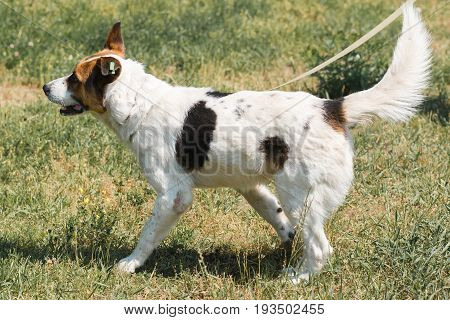 Cute Mixed Breed Dog Smiling While Walking In The Park, Animal Shelter Concept