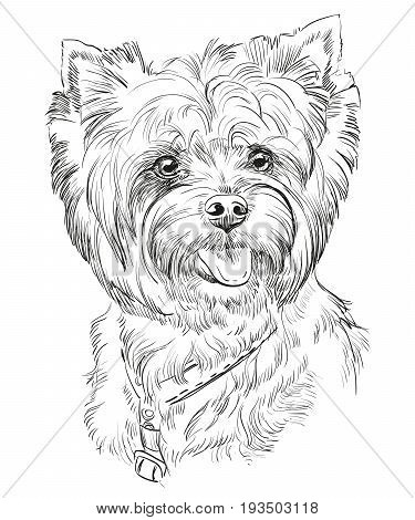 Vector Portrait of Yorkshire Terrier in black color hand drawing Illustration on white background
