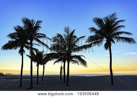 Summer sunset at Ipanema beach with coconuts trees in Rio de Janeiro