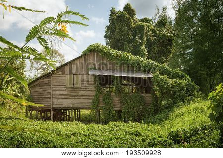 View of nice bamboo hut in summer environment