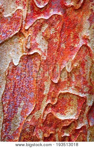 Plane tree bark abstract texture saturated bright background