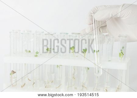 Hand in rubber glove holding a test-tube with biological material closeup in the laboratory