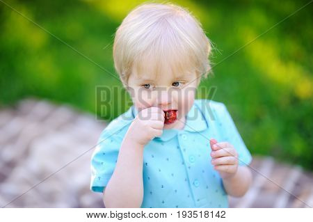 Beautiful Little Boy Eating Strawberry During Picnic In Summer Sunny Park