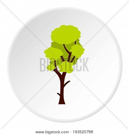 Tall green tree icon in flat circle isolated vector illustration for web