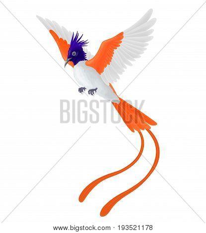 Flying exotic bird with orange feathers isolated on white background. Indian paradise flycatcher.