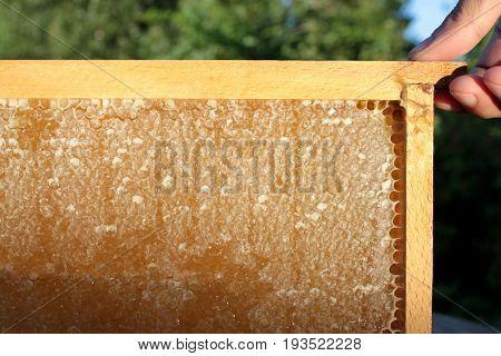 Yummy Honeycomb , close up image .
