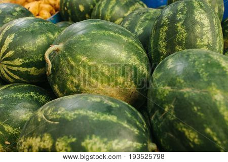 Many watermelons on the farm market. Local production. Harvest. Local market.