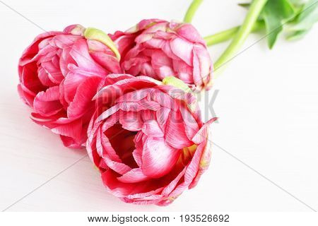 bouquet of three spring pink terry tulips, white wooden background
