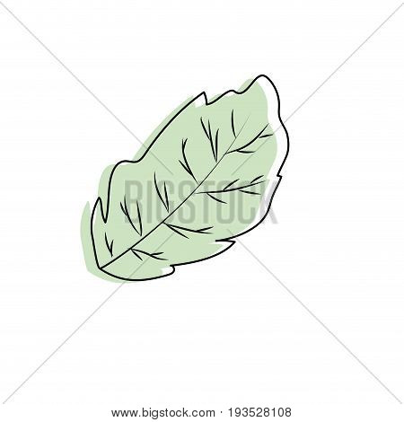 peppermint leaf plant and natural condiment vector illustration