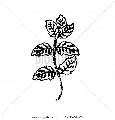figure peppermint plant ingredient to condiment of food vector illustration