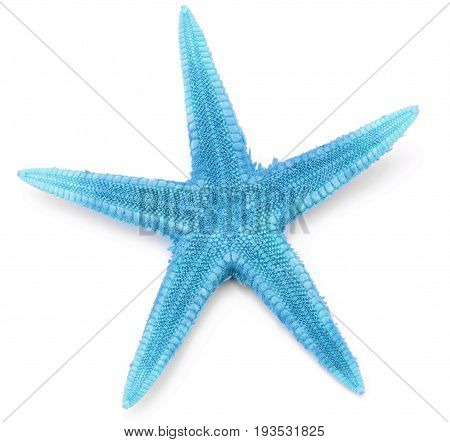 Blue color seastar, isolated on white background.