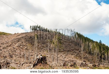 Evident deforestation in the Cascades mountain range of Oregon.