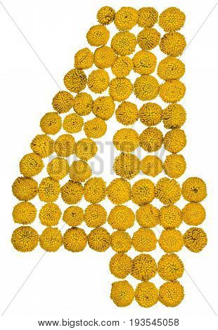 Arabic Numeral 4, Four, From Yellow Flowers Of Tansy, Isolated On White Background