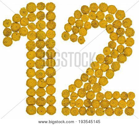Arabic Numeral 12, Twelve, From Yellow Flowers Of Tansy, Isolated On White Background