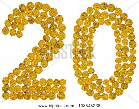 Arabic Numeral 20, Twenty, From Yellow Flowers Of Tansy, Isolated On White Background