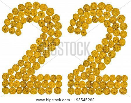 Arabic Numeral 22, Twenty Two, From Yellow Flowers Of Tansy, Isolated On White Background
