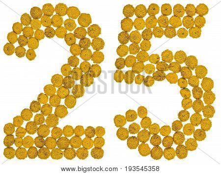 Arabic Numeral 25, Twenty Five, From Yellow Flowers Of Tansy, Isolated On White Background