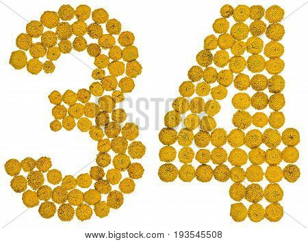 Arabic Numeral 34, Thirty Four, From Yellow Flowers Of Tansy, Isolated On White Background
