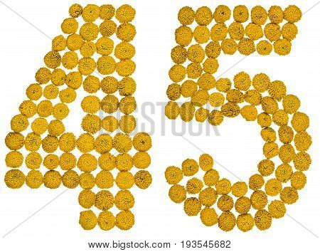 Arabic Numeral 45, Forty Five, From Yellow Flowers Of Tansy, Isolated On White Background