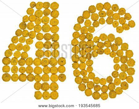 Arabic Numeral 46, Forty Six, From Yellow Flowers Of Tansy, Isolated On White Background
