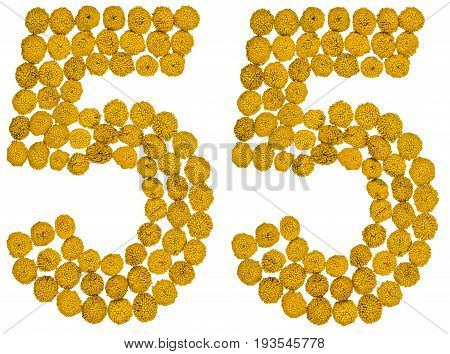 Arabic Numeral 55, Fifty Five, From Yellow Flowers Of Tansy, Isolated On White Background