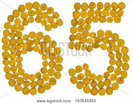 Arabic Numeral 65, Sixty Five, From Yellow Flowers Of Tansy, Isolated On White Background