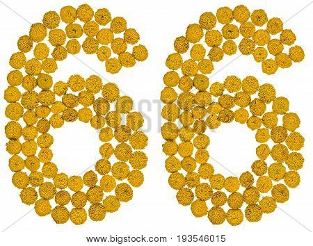 Arabic Numeral 66, Sixty Six, From Yellow Flowers Of Tansy, Isolated On White Background