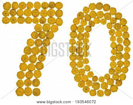 Arabic Numeral 70, Seventy, From Yellow Flowers Of Tansy, Isolated On White Background