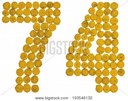 Arabic Numeral 74, Seventy Four, From Yellow Flowers Of Tansy, Isolated On White Background