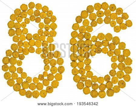 Arabic Numeral 86, Eighty Six, From Yellow Flowers Of Tansy, Isolated On White Background